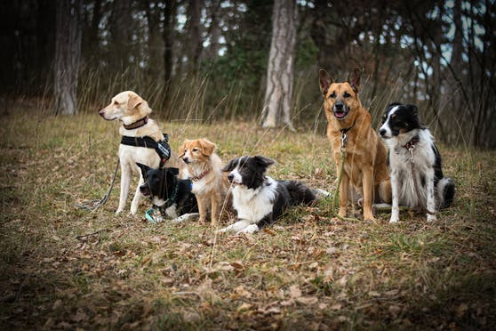 Die Gewinner während des Lockdowns sind definitv unsere Hunde. Sie genießen Homeoffice und Homeschooling.