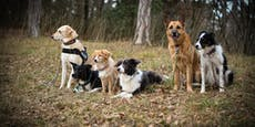 Muss man auch Hunde vom Lockdown entwöhnen?