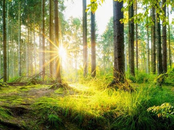 Wälder sind schützenswert, da sie in mehrfacher Hinsicht das Klima positiv beeinflussen.