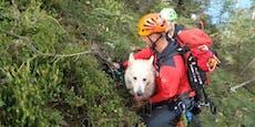 Schäferhund (12) rutscht aus, muss gerettet werden