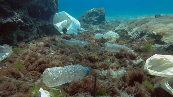 Plastikmüll ist eine tödliche Gefahr für Meeresbewohner!