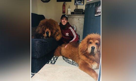 Hundebesitzer Shaun Kingsnorth gerät manchmal in Erklärungsnot, wenn er mit seinen Riesenhunden Gassi geht.