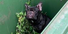 Wiener will Bulldogge im Biomüll entsorgen