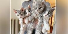 Diese fluffigen Kätzchen bringen Instagram zum Rätseln