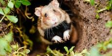 Klimakrise– 40 % aller Tierarten in Österreich gefährdet