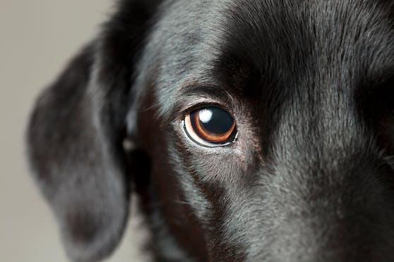 Wie und was kann mein Hund denn nun alles sehen?