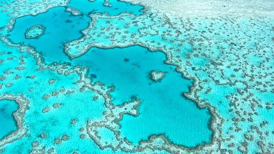 Das größte Korallenriff der Welt: Great Barrier Reef (Australien).