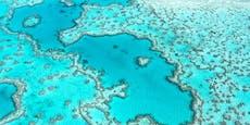 So schlecht steht es weltweit um Korallenriffe