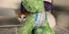 """Kätzchen wird mit """"bestem Freund"""" unbewusst zum Held"""