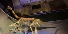 Neue Dino-Schau im Naturhistorischen Museum