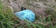 Kater in Müllsack gesteckt und brutal erschlagen