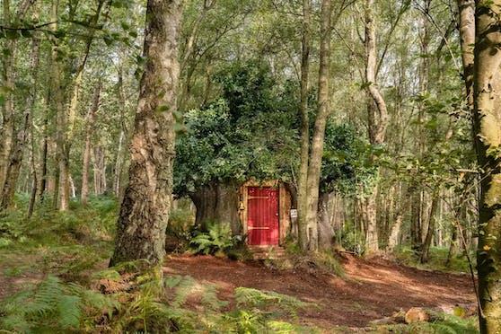 Die Nachbildung des Baumhauses von Winnie Puuh hätte nicht besser gelingen können.