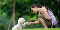 Verstehst du deinen Hund? Darauf solltest du achten