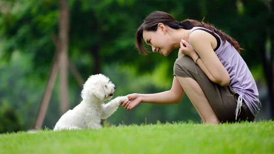 Die meisten Signale des Hundes sind recht eindeutig, andere sind für uns schwer zu verstehen. Was uns der Hund sagen will, liest du hier.