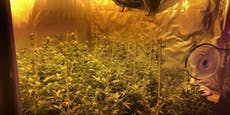 Cannabis-Plantage in Strasshof aufgeflogen