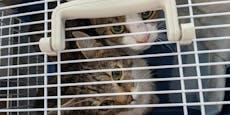 Wiener ließ 38 Katzen allein in Mini-Wohnung verkümmern