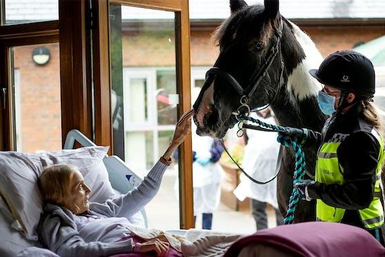 """Dieses Bild sagt mehr als tausend Worte. Nie hätte die sterbende Jan Holman gedacht, dass sie ihr geliebtes Pferd """"Bob"""" noch einmal berühren könne."""