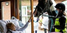 Sterbende darf zum letzten Mal ihr Pferd berühren