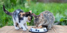 Dreist! 40 Dosen Katzenfutter aus Tierheim gestohlen