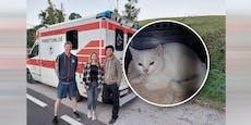 Jugendliche überführen mit Handy-Video Tierquäler