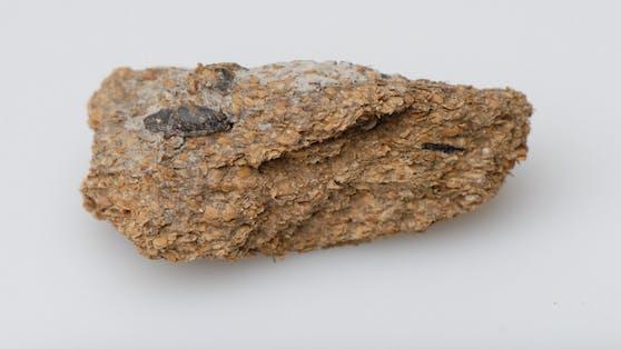 Anhand von 2.700 Jahre alten Exkrementen stellten Forscher fest, das damals schon Blauschimmelkäse, Blunzen und Bier serviert wurden.