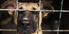 Der Hund aus dem Ausland - darauf solltest du achten