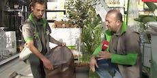 So bringst du deine Pflanzen sicher durch den Winter