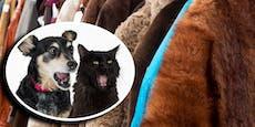 Achtung! Diese Begriffe bedeuten Katzen- oder Hundefell