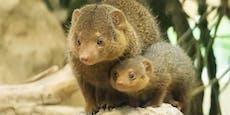 Drei neue Tier-Babys im Tiergarten Schönbrunn