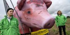 Studie: Tierwohl senkt Risiko von Pandemien