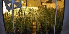 Riesige Cannabiszucht in leer stehendem Büro entdeckt