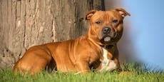 Nach Sex mit Hund fiel Täter tot um