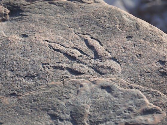 Der Fußabdruck ist laut dem National Museum in Cardiff 220 Millionen Jahre alt.