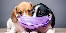 Diese Stadt bietet Corona-Tests für Hunde & Katzen an