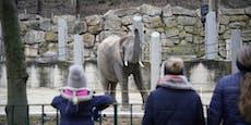 Törööö! So begrüßten die Tiere in Schönbrunn ihre Gäste
