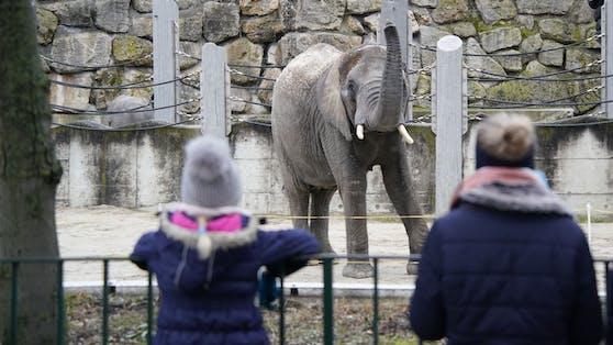 So begrüßen die Tiere aus dem Zoo Schönbrunn in Wien die Besucher nach dem Lockdown.