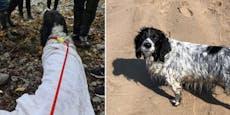 16 Stunden auf See vermisst - Hund schwamm Ente nach