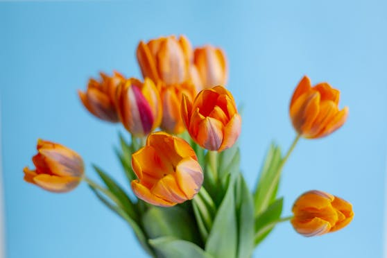 Blumen (Symbol)