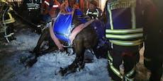 Feuerwehrgroßeinsatz: Pferd fiel in gefrorenen Tümpel