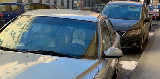 Ein Hund übernahm das Steuer dieses Volvos