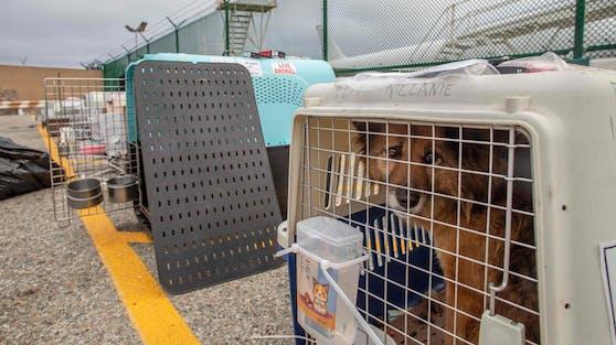 """Die Tierschutzorganisation """"No Dogs left behind"""" kaufte 29 Vierbeiner aus einem Fleischmarkt in China frei."""