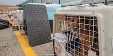 29 Hunde entgehen der Hölle auf Erden