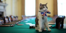 "10 Dienstjahre im Amt: ""Chief Mouser Larry"""