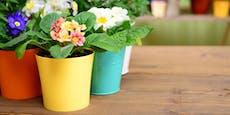 Diese Pflanzen bringen den Frühling in deine Wohnung