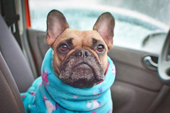 Wie lange darf denn ein Hund nun wirklich im kalten Auto sitzen?