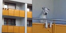 Hund fror Tag und Nacht am Balkon