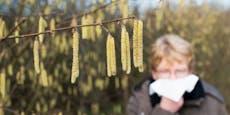 Pollen-Alarm jetzt in ganz Österreich