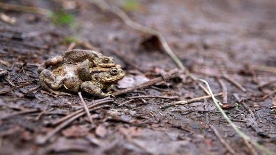 Ab März habens die Kröten wieder gnädig. Bitte vorsichtig fahren!