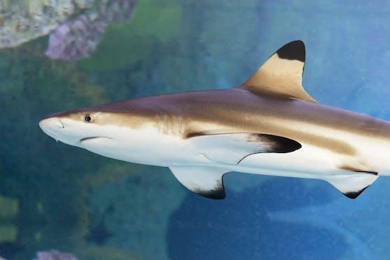 """Auch die Haie sagen wieder """"hai"""" zu den Besuchern."""