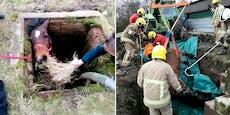 Spektakuläre Rettung: Pferd stürzte in Güllegrube
